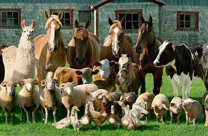 Гранты на развитие семейных животноводческих ферм
